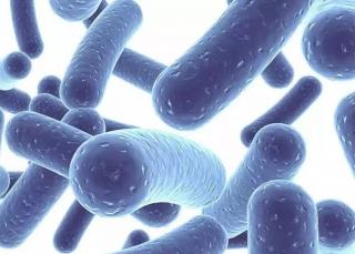 益生菌的作用和功效