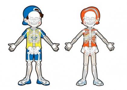 骨龄评估与成年身高预测
