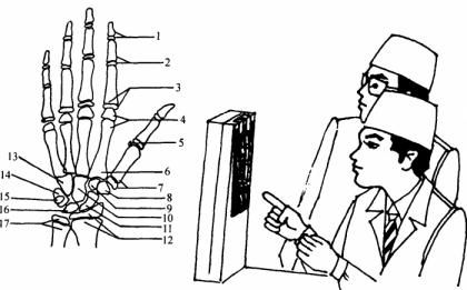 骨龄与身高预测——TW3骨龄评分法预测身高